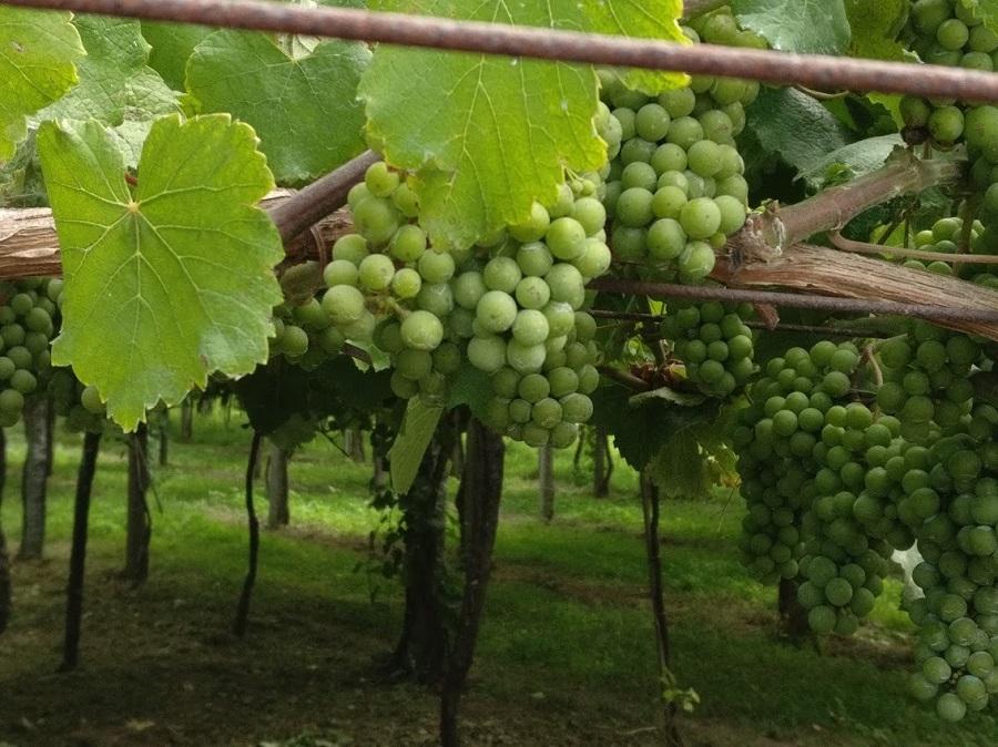 Lider en venta de vinos de Bodega Castillo de Maetierra