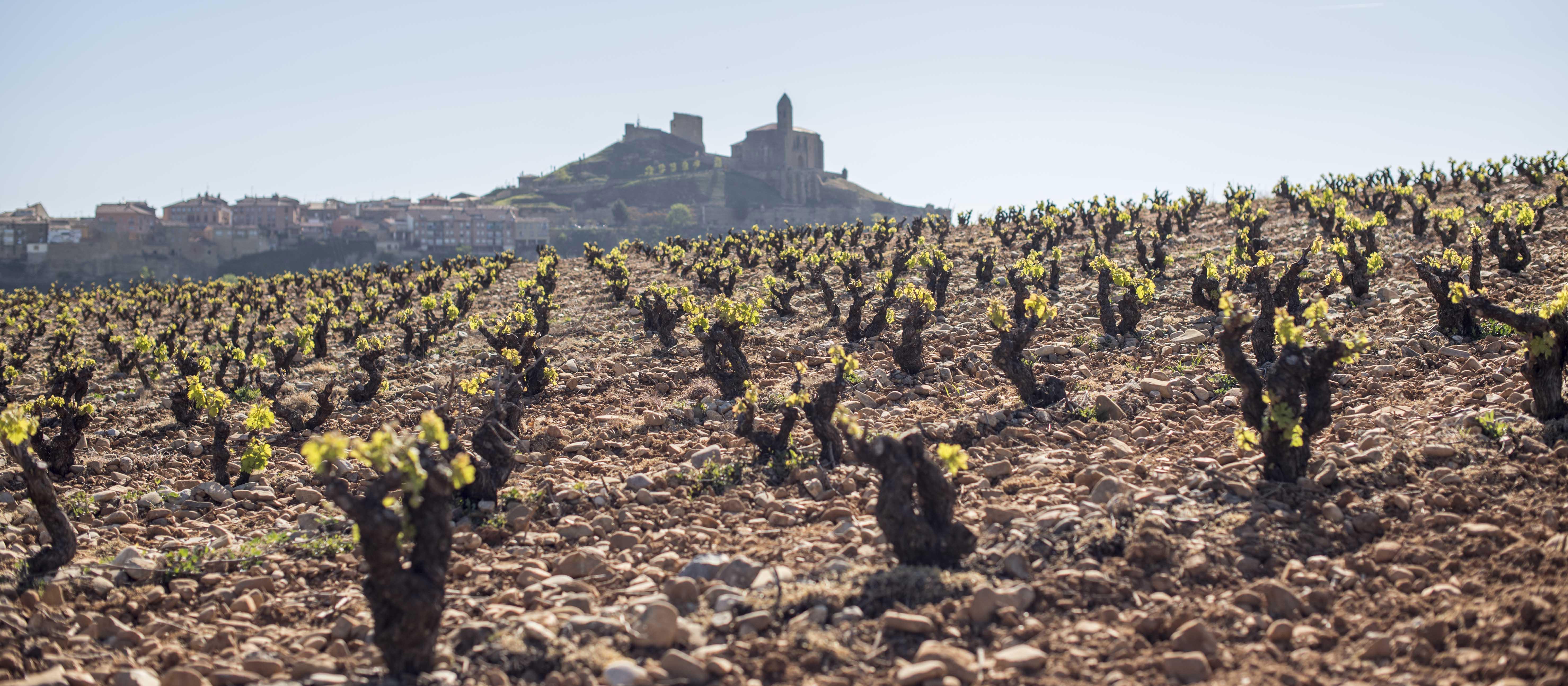 Lider en venta de vinos de Bodega Classica