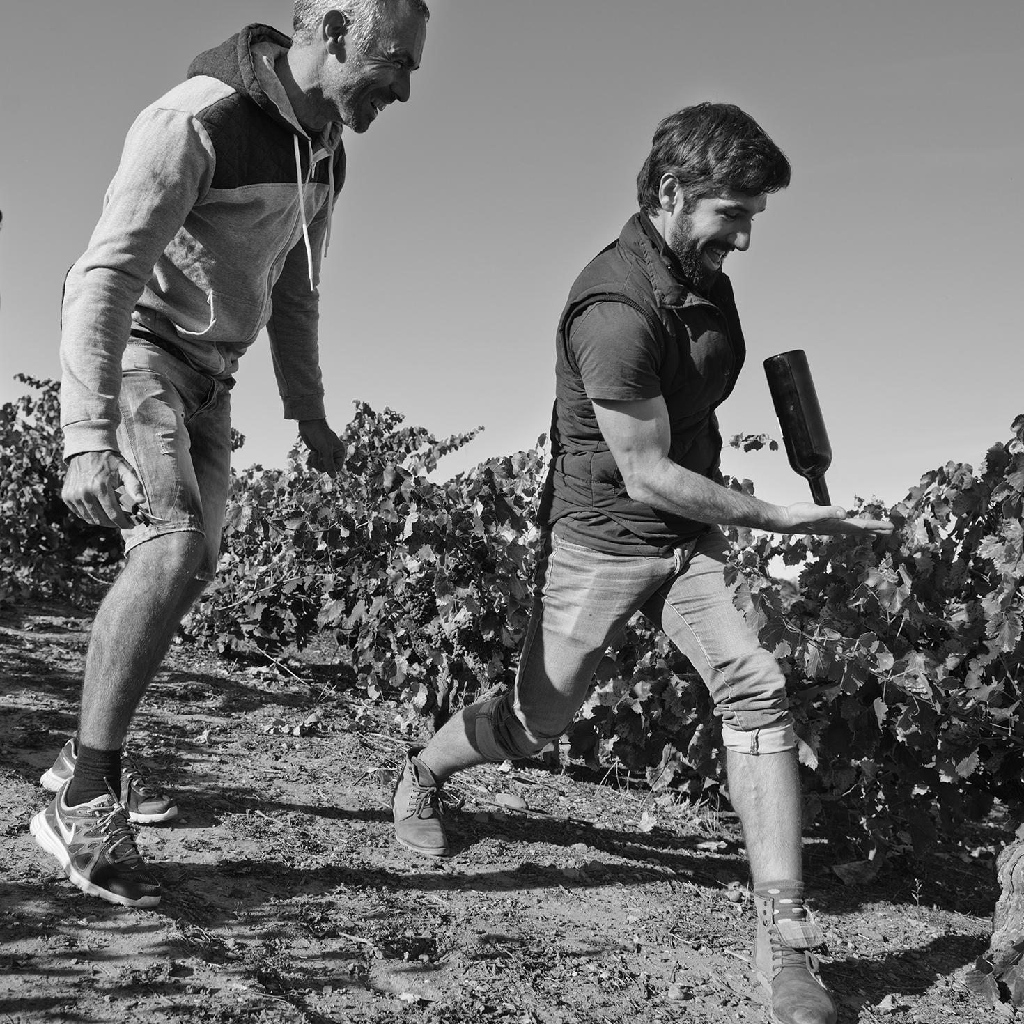 Comprar vino al mejor precio de Bodega Classica