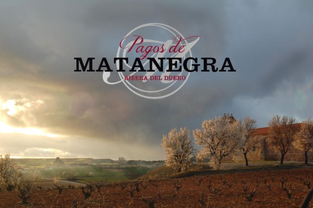 Mayor tienda online de vinos de Bodega Pagos de Matanegra