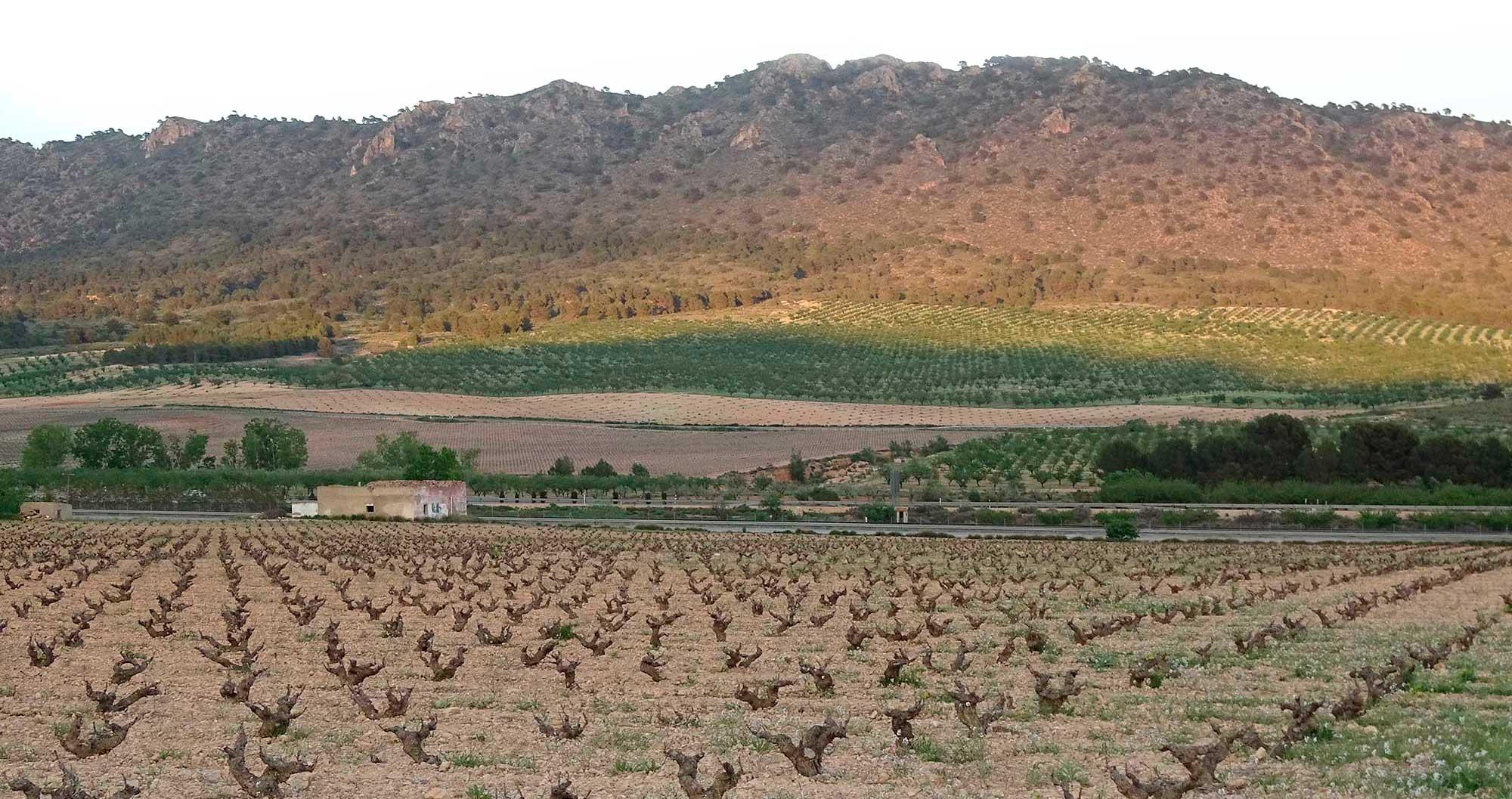 Lider en venta de vinos de Bodega Bruma del Estrecho