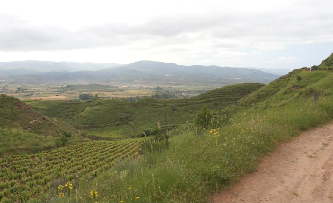 Comprar vino al mejor precio de  Bodega  Palacio del Camino Real