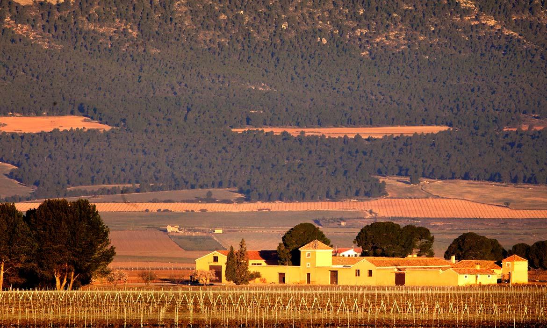 Lider en venta de vinos de Bodega Hacienda el Espinar