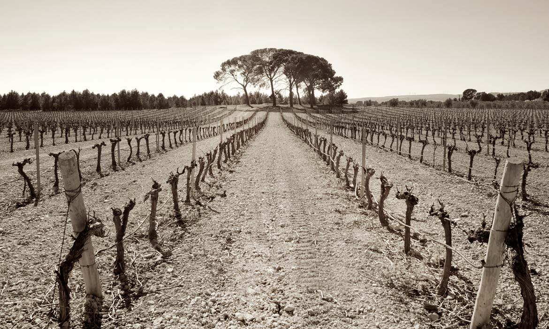 Mayor tienda online de vinos de Bodega Hacienda el Espino