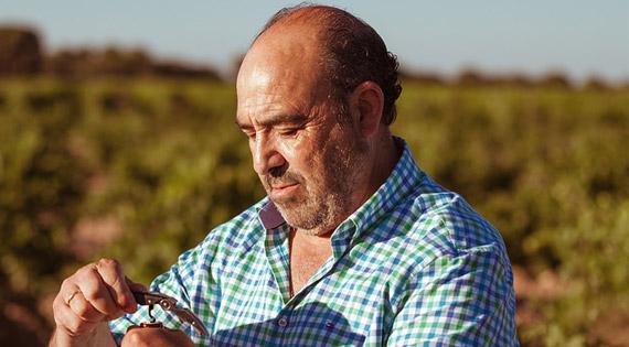 Mayor tienda online de vinos de Bodega Javier Sanz