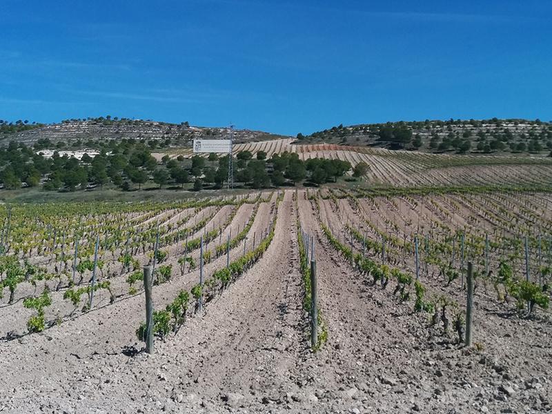Mayor tienda online de vinos de Bodega Matarromera