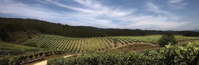 Comprar vino al mejor precio de Bodega Copaboca