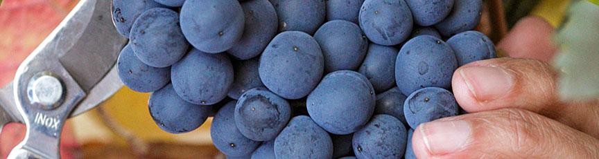 Lider en venta de vinos de Bodega Protos