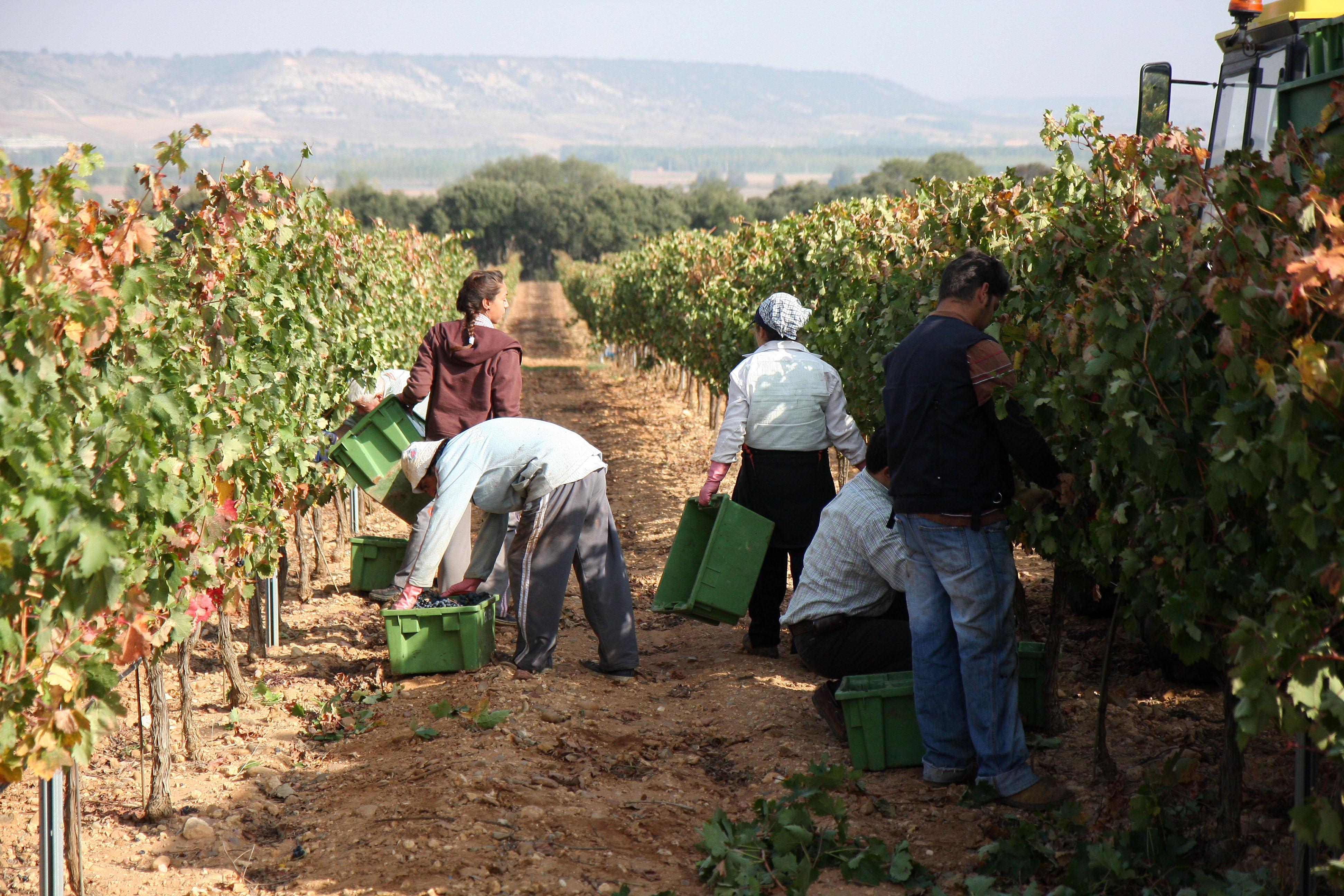 Mayor tienda online de vinos de Bodega Quinta Negredo