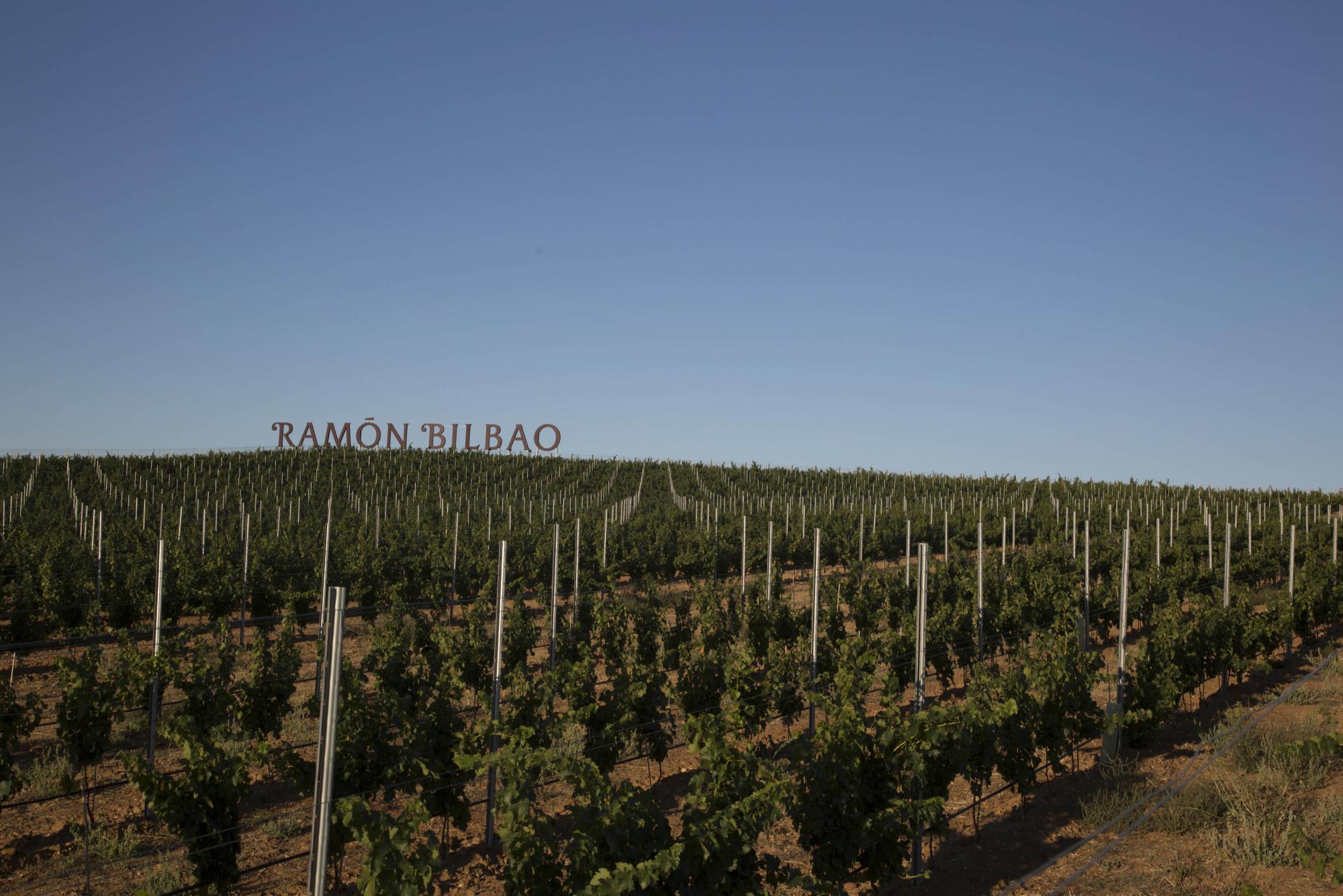 Mayor tienda online de vinos de Bodega Ramón Bilbao
