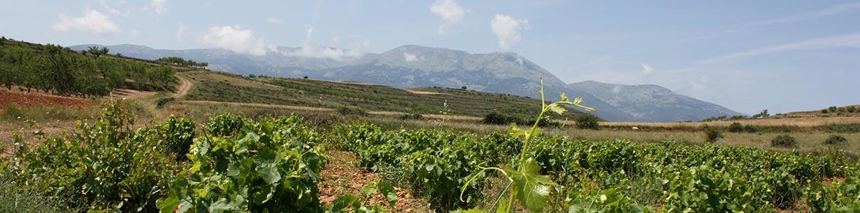 Mayor tienda online de vinos de Bodega Winery Arts